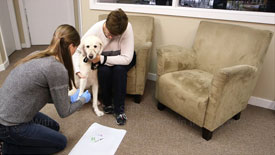 Seroclinix Diagnostic Testing Videos How to draw a blood sample from a dog